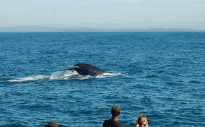 Whales & Dolphins watching